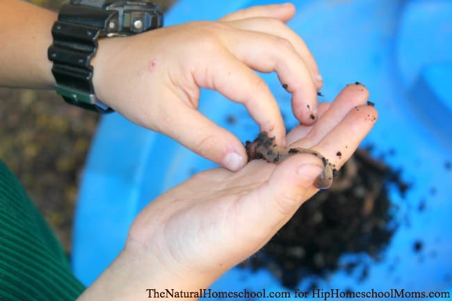 Nature Ideas for Kids -List of great ways to take the fun and learning outside