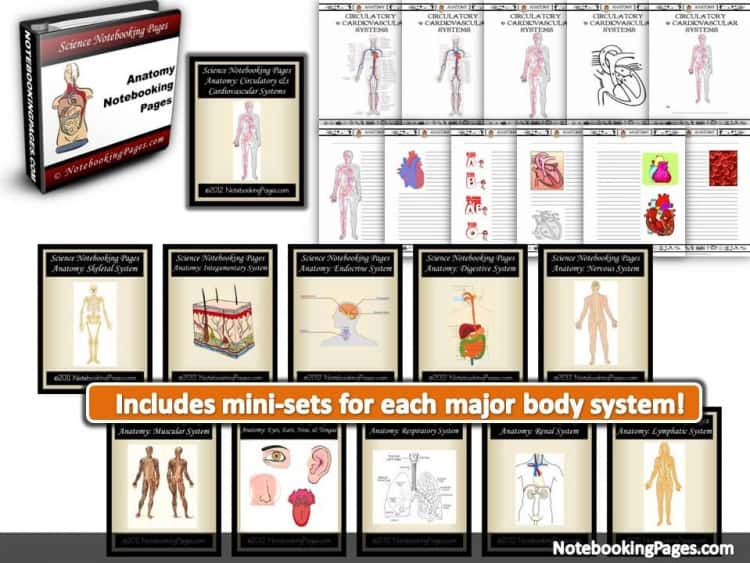 np-anatomy