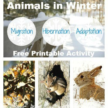 animals-in-winter-square