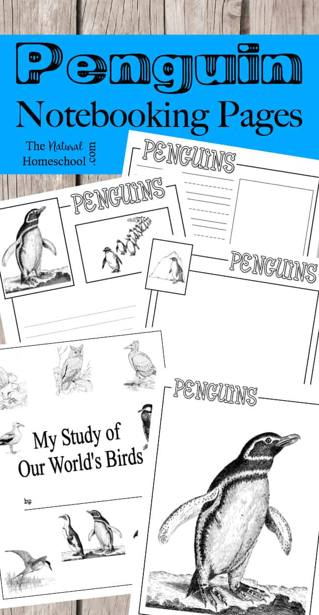 penguin-notebooking-pages