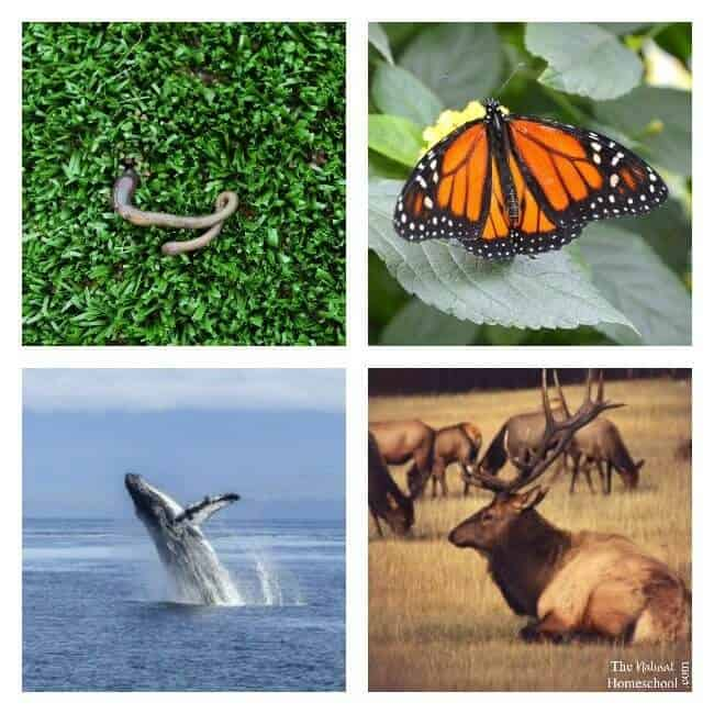 What is animal migration in Winter and why do animals migrate? It is the travel of animals to another place, for the search for food or warmer temperatures.