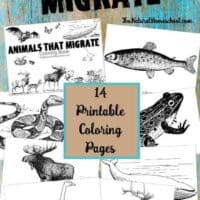 Animals that Migrate in Winter ~ Printable Coloring Pages