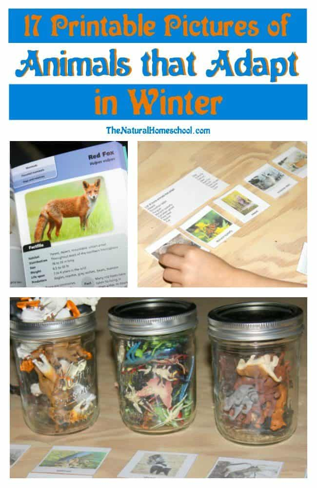 In this post, we share pictures of animals that adapt in winter. We will show you how we used them, but really, there are so many things you can do with them.