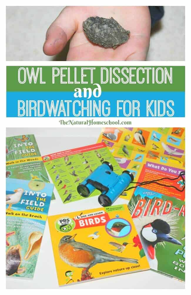 Birdwatching for kids is an amazing experience. Imagine giving them a field guide of local bird and a pair of binoculars and send them off to explore and find birds!