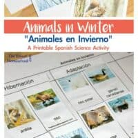 Animals in Winter: Which Animals Migrate, Adapt & Hibernate IN SPANISH {Printable & Video}