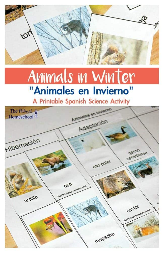 We have done a similar Animals in Winter migration, adaptation and hibernation activity before, but now, it's in Spanish!