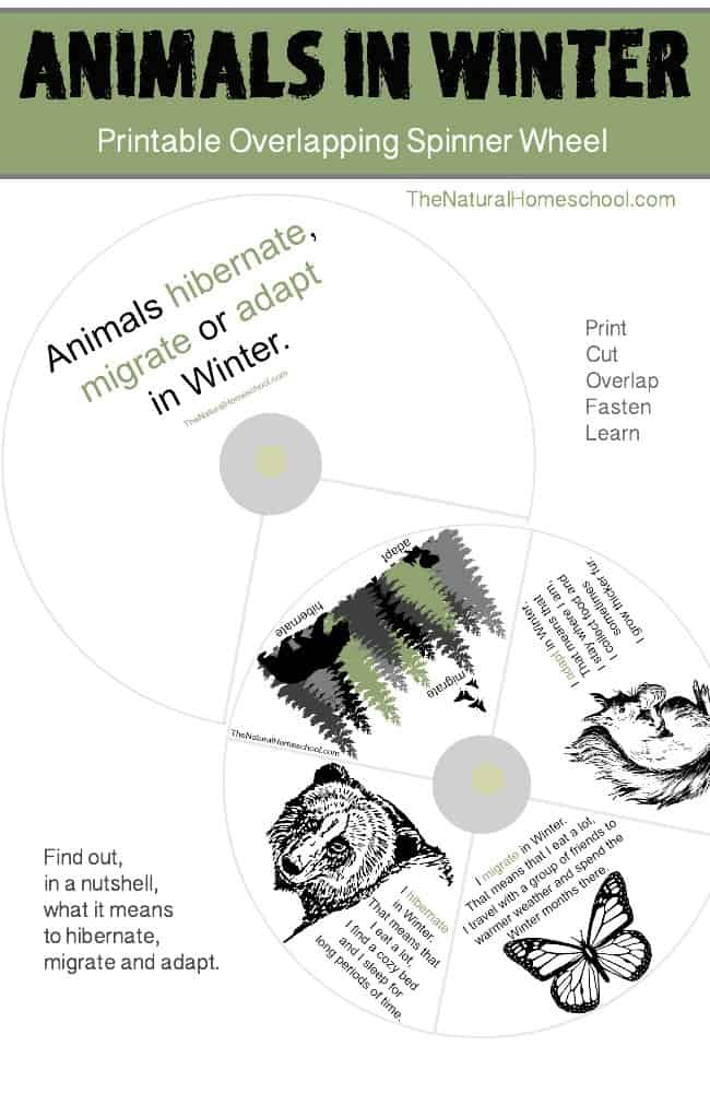 We have been leaning what Hibernation, Adaptation and Migration are, which animals do each and how their lives function during Winter. It has been amazing! :) Now, we make a printable craft to remind little ones what hibernation, adaptation and migration are at a glance. Get it here!