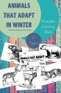 Animals that Adapt in Winter ~ Printable Coloring Pages