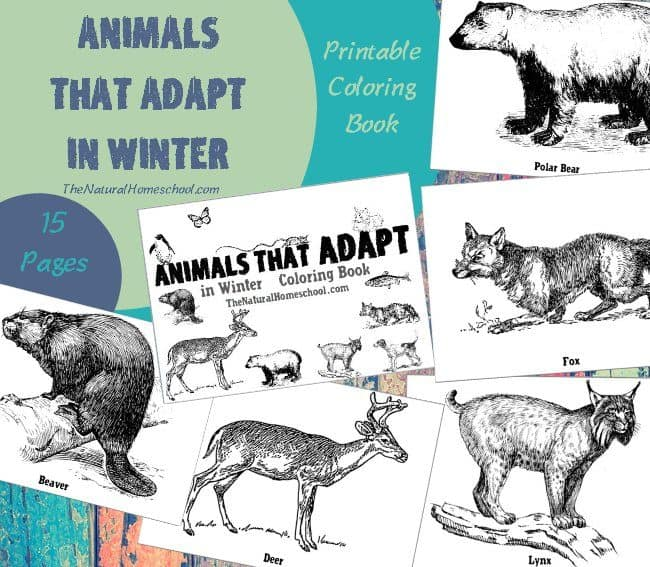 With this coloring book, you will give your littles a pretty good idea on animals that adapt in Winter list of 14 awesome animals, plus a cover for this awesome book.