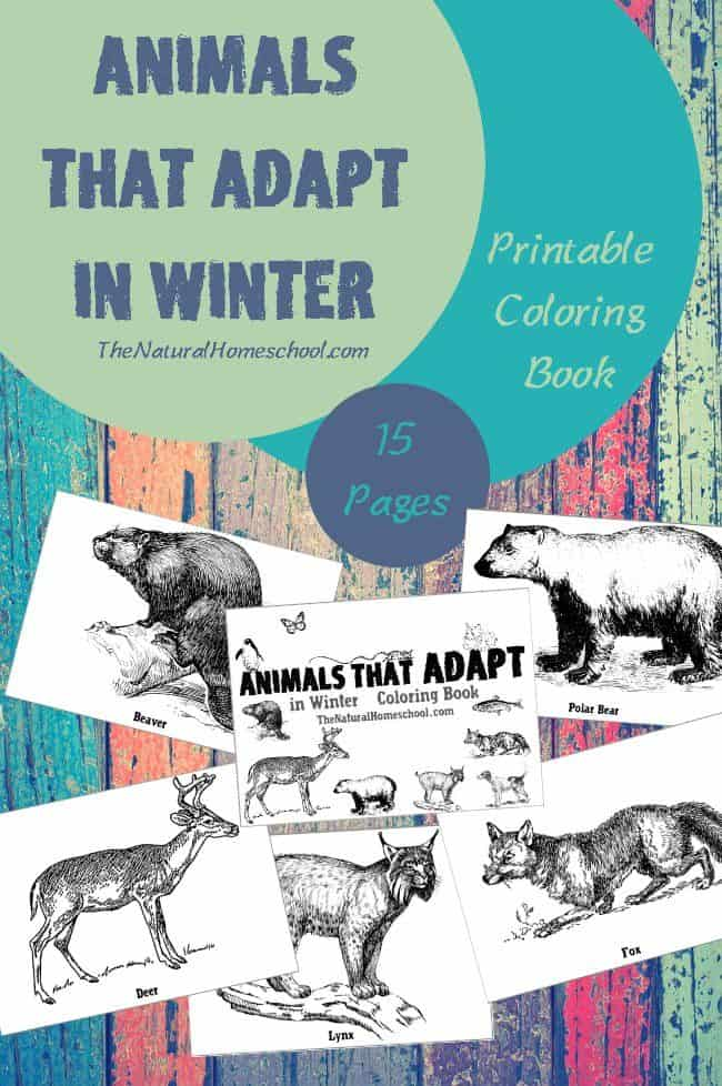 Animals that Adapt in Winter Printable Coloring Book
