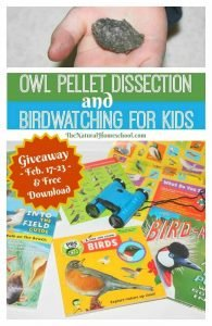 Owl Pellets Dissection and Birdwatching for Kids {Awesome Giveaway + Download}