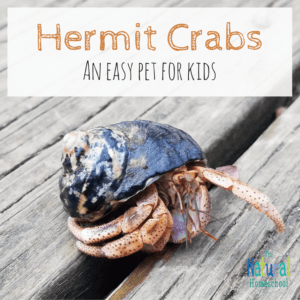 Hermit Crabs –  An Easy Pet For Kids