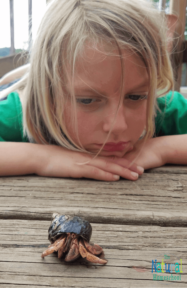 Hermit crabs make an easy pet for kids. I didn't always know this. Actually, I had never considered a hermit crab for a pet at all until our children were gifted two crabs.