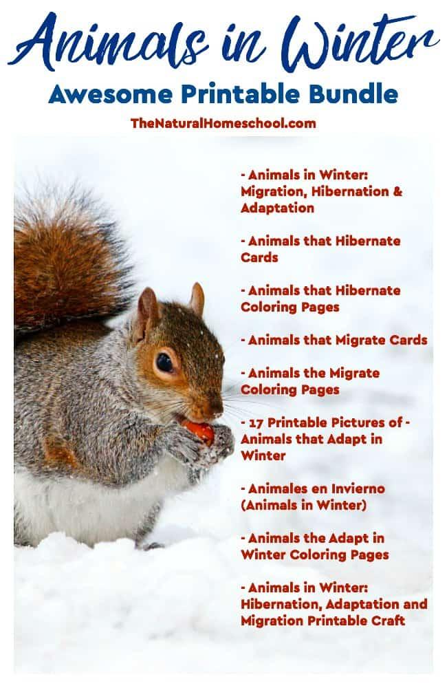 animals in winter hibernation adaptation and migration printable craft the natural homeschool. Black Bedroom Furniture Sets. Home Design Ideas