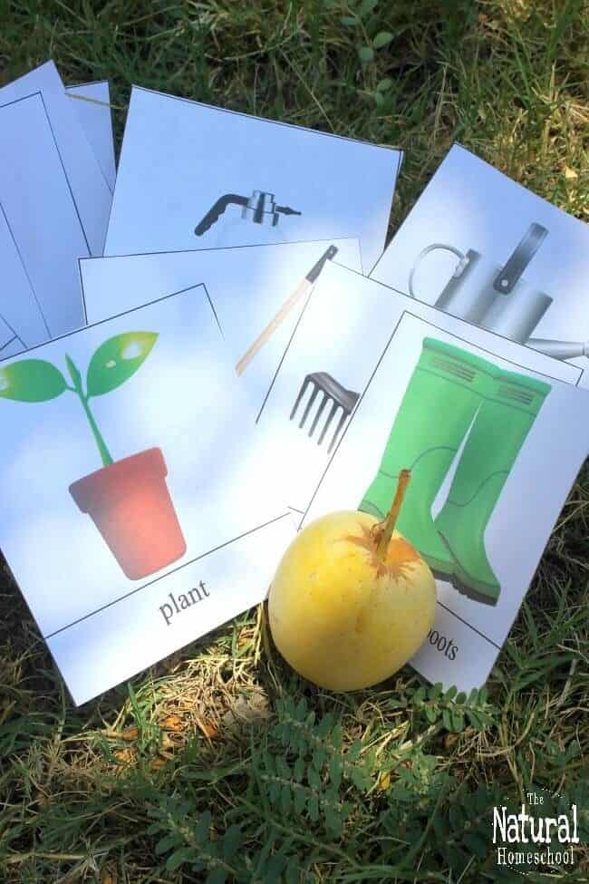 Fall will be here before we know it, so in the meantime, we will be using some awesome gardening ideas for kids! It includes a wonderful set of 3-part cards.