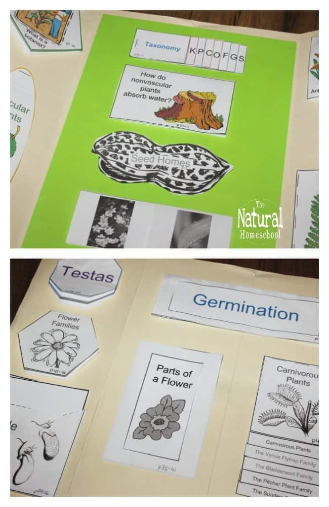 Take a look at how I am planning on using these Botany projects for kids this year to keep learning fun!