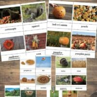 Fall Words for Kids - 24 Printable 3-Part Cards