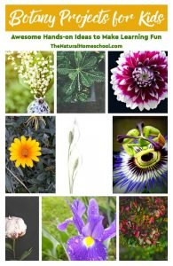 Botany Projects for Kids – Awesome Hands-on Learning Ideas