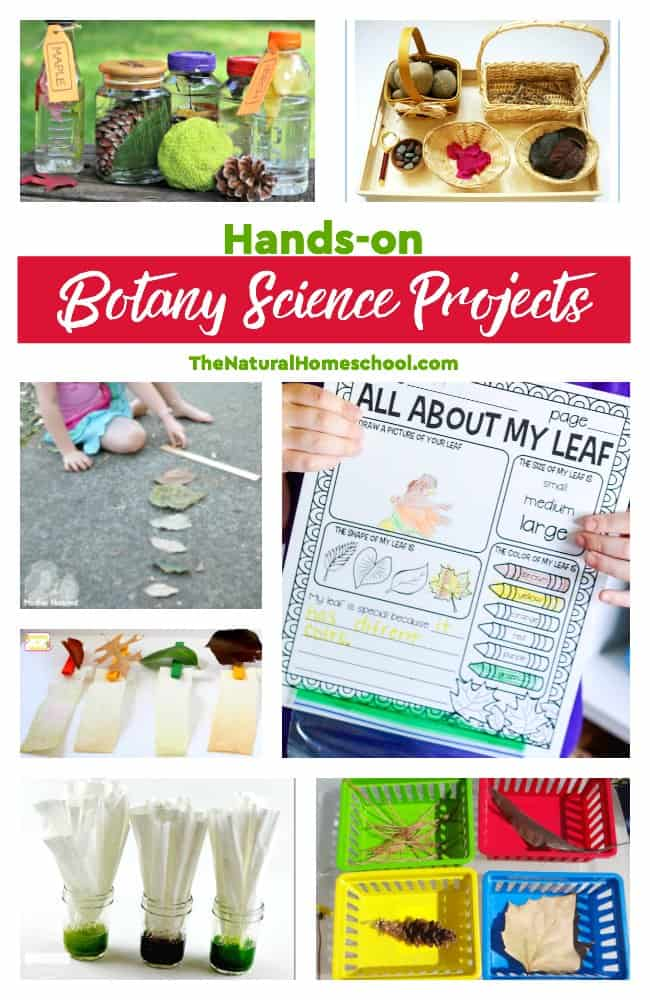 This is such a great list of educational leaf activities for kids! Whether you study leaves in Spring or in Fall, these awesome Botany Science projects are perfect for anytime!