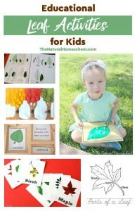 Educational Leaf Activities for Kids – Botany Science Projects