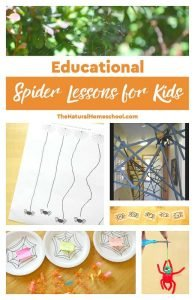 Educational & Math Spider Lessons for Kids