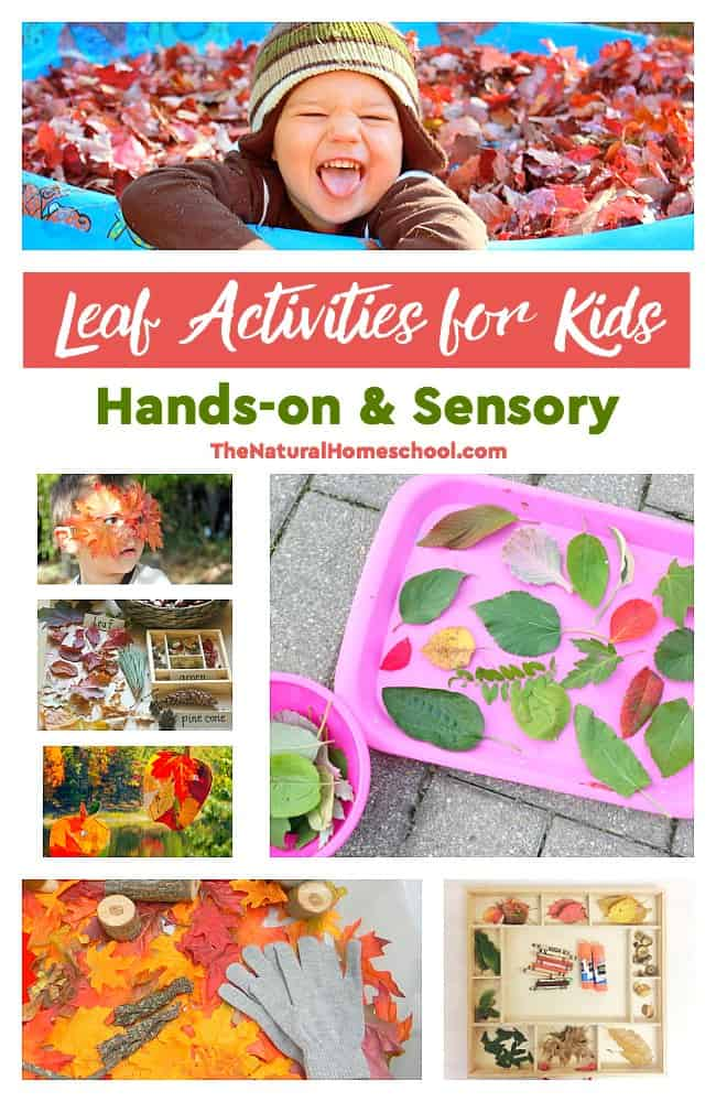 In this post, we share a great list of leaf activities for kids. It includes hands-on and sensory activities, as well as some great leaf arts & crafts.