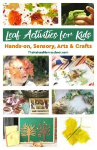 Leaf Activities for Kids – Hands-on, Sensory, Arts & Crafts