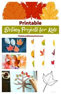 Printable Botany Projects for Kids and Learning Leaf Activities