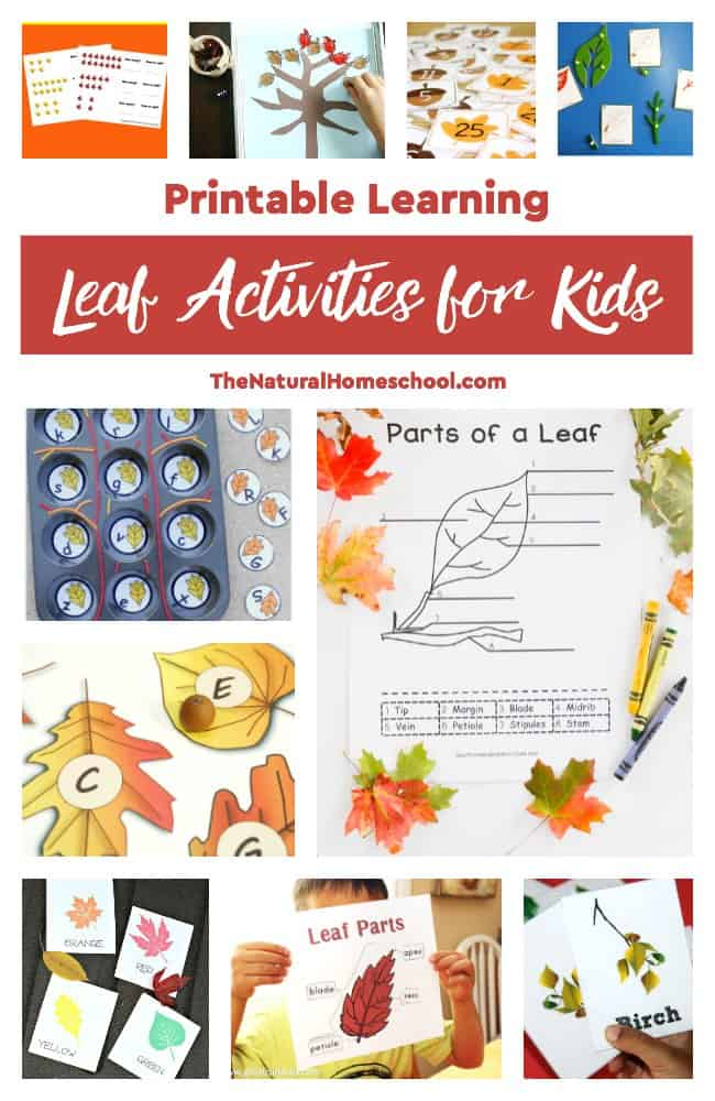 Check out this list of awesome printable Botany projects for kids to do hands-on learning! We also love the second list of printable leaf activities for kids to learn more!