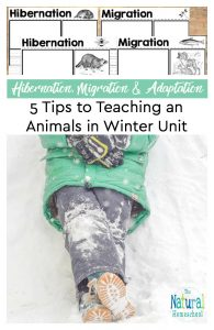5 Tips to Teaching and Animals in Winter Unit – Printable Hibernation, Migration and Adaptation Notebooking Pages