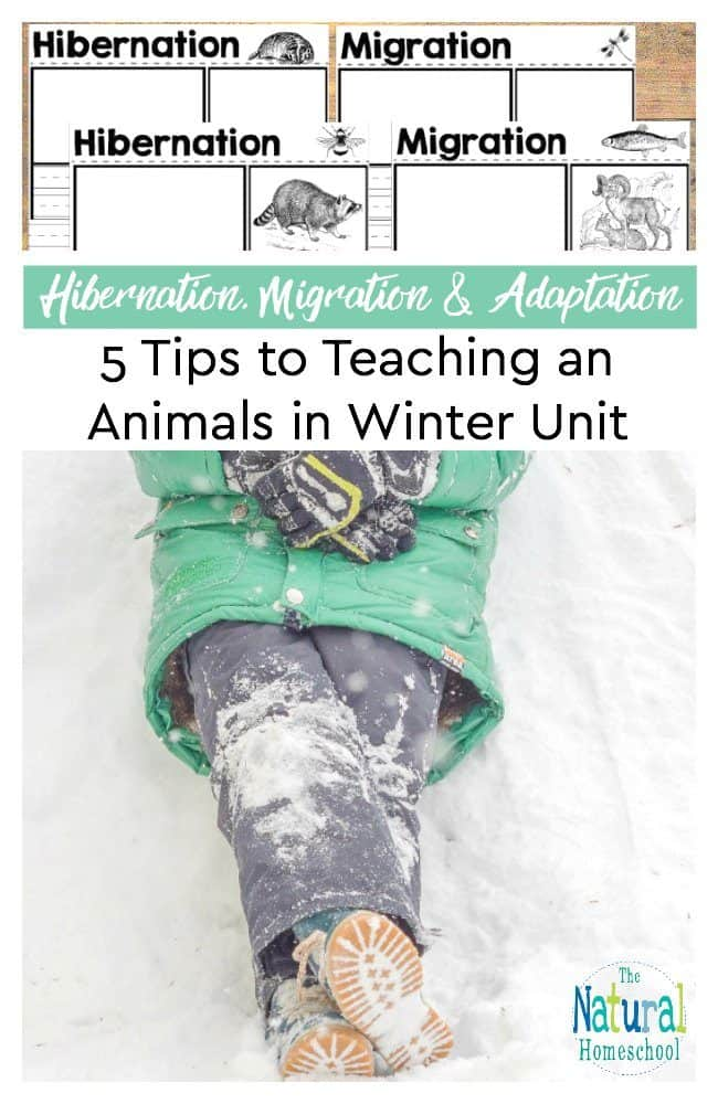 In this post, I will share with you five tips on how you can teach your own animals in winter units to your kids at home. I am also really awesome stores and a free printable said you can use right away in your unit.