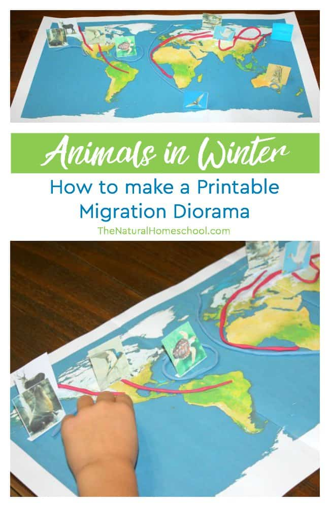 In our Animals in Winter ~ hibernation, adaptation and migration unit, we love to include hands-on activities, so we are learning how to make a migration diorama!
