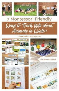 Montessori-Friendly Ways to Teach Kids about Animals in Winter ~ Printables Included