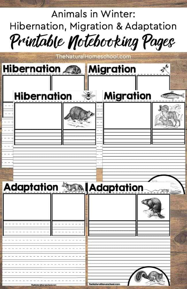 Learning about hibernation, adaptation and migration is simply fascinating for children and adults alike. Animal behavior is quite interesting in general. In this post, we will delve into some wonderful Montessori-friendly ways to teach kids about animals in Winter.