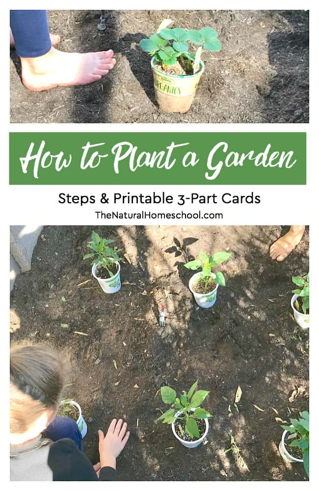 In this post, we will show you how we plant a garden of potted herbs and also fruit and vegetable plants on the ground. We also used some how to plant a garden set of printable 3-part cards to help the kids remember the order of things.