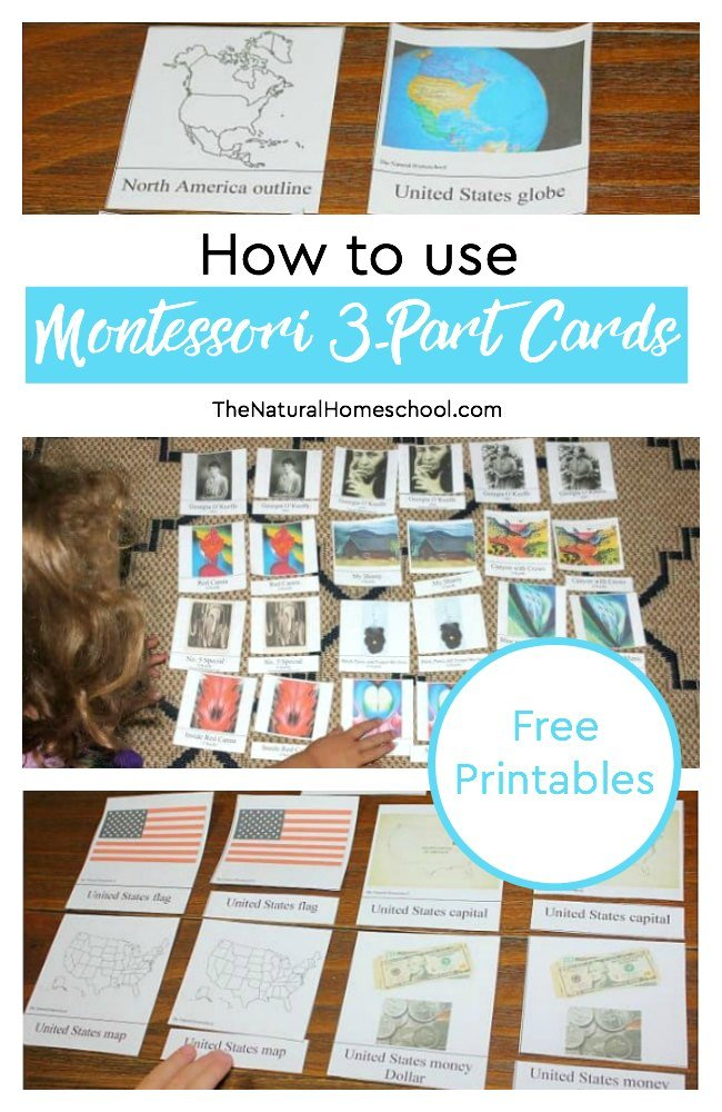 Begin this activitywith kids by following the standard Montessori Method rules for 3-part cards. So keep reading on so you can learn how to use Montessori 3-Part Cards.