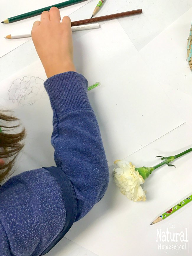 Let's get started on our famous artists for kids unit on Linnaeus! Here are some fun Linnaeus Art activities that kids will find fun and educational.