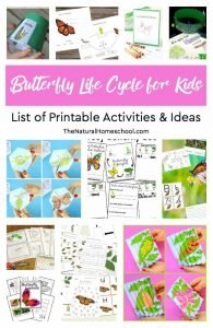 Butterfly Life Cycle for Kids ~ List of Printable Activities & Ideas