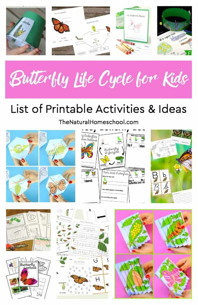 This is an amazing list of printable activities about the butterfly life cycle for kids to learn, enjoy and get creative! In this list, you will find a set of fun activities including a butterfly life cycle worksheet, a caterpillar to butterfly life cycle printable, a butterfly life cycle lesson plan and many more butterfly life cycle activities!
