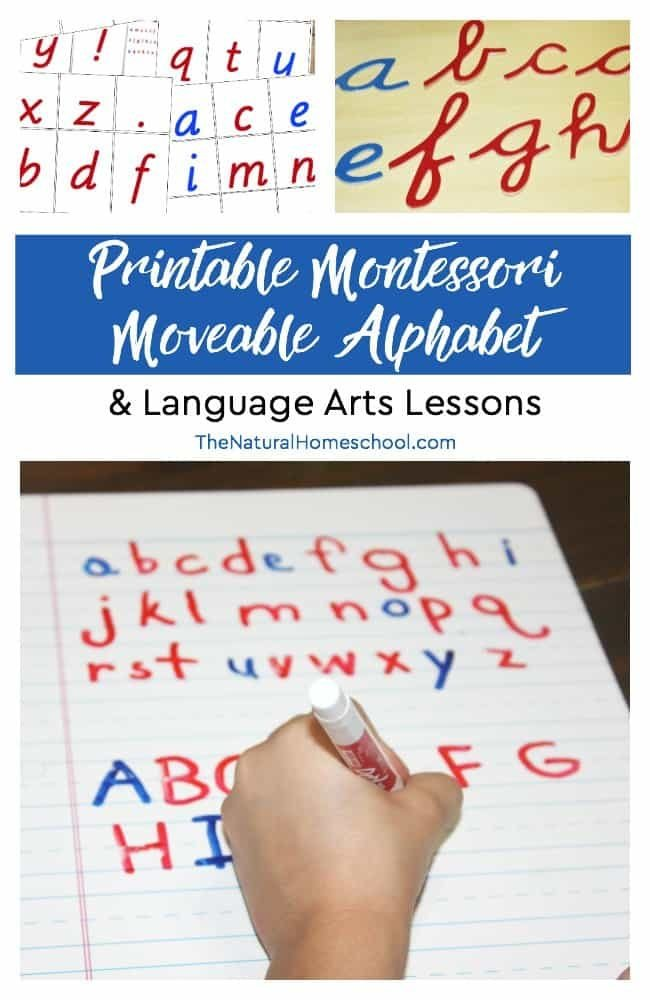 In this post, we share with you some essential Montessori teaching materials that you will need to teach lessons using the Montessori Moveable Alphabet in manuscript and cursive.