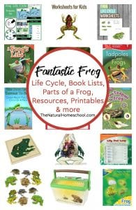 Book Lists on Frog Life Cycle, Parts of a Frog for Kids, Resources, Printables & more