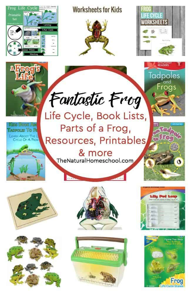In this post you will find amazing book lists of the frog life cycle, parts of a frog for kids, fun hands-on resources, frog printables and more!
