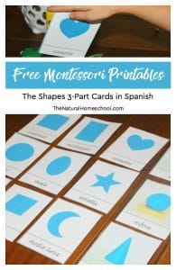 Montessori Curriculum Free Sensorial Lesson ~ The Shapes 3-Part Cards in Spanish