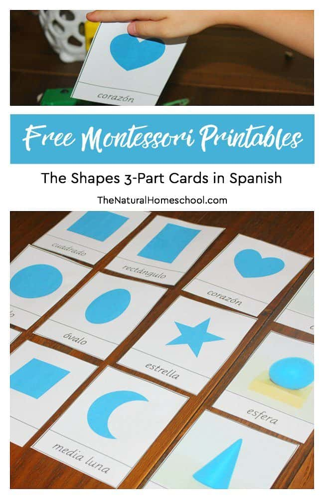 In this post, we are so happy to share with you a Montessori Curriculum Free Sensorial Lesson! This one will teach children the names of shapes, so we have a free printable set of shapes 3-part cards in Spanish for you to download!