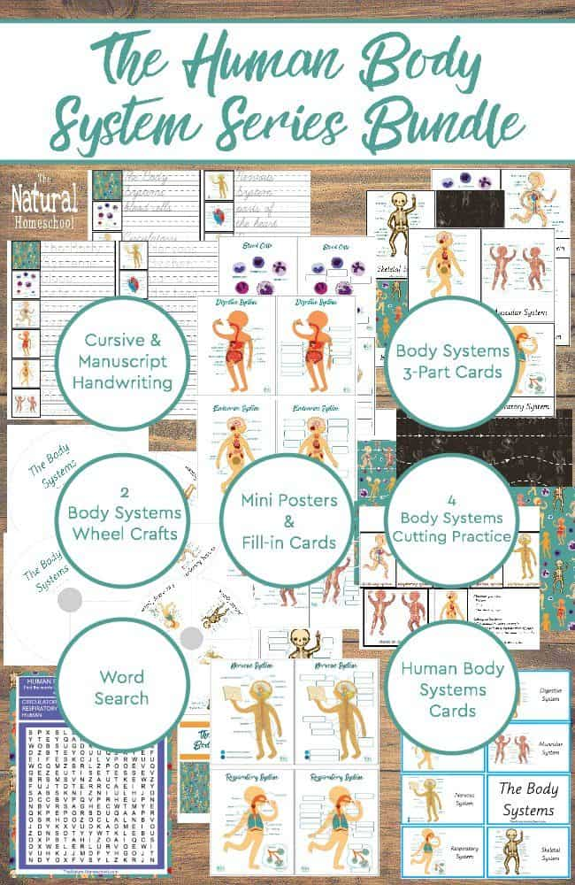 I think you will be as excited as we are about learning about human anatomy this year. We have an awesome human body system series bundle that is simply perfect for this unit! You will love it!