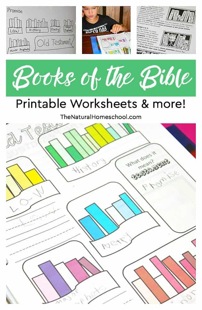 photo regarding Books of the Bible Printable titled Publications of the Bible Printable Worksheets additional! - The