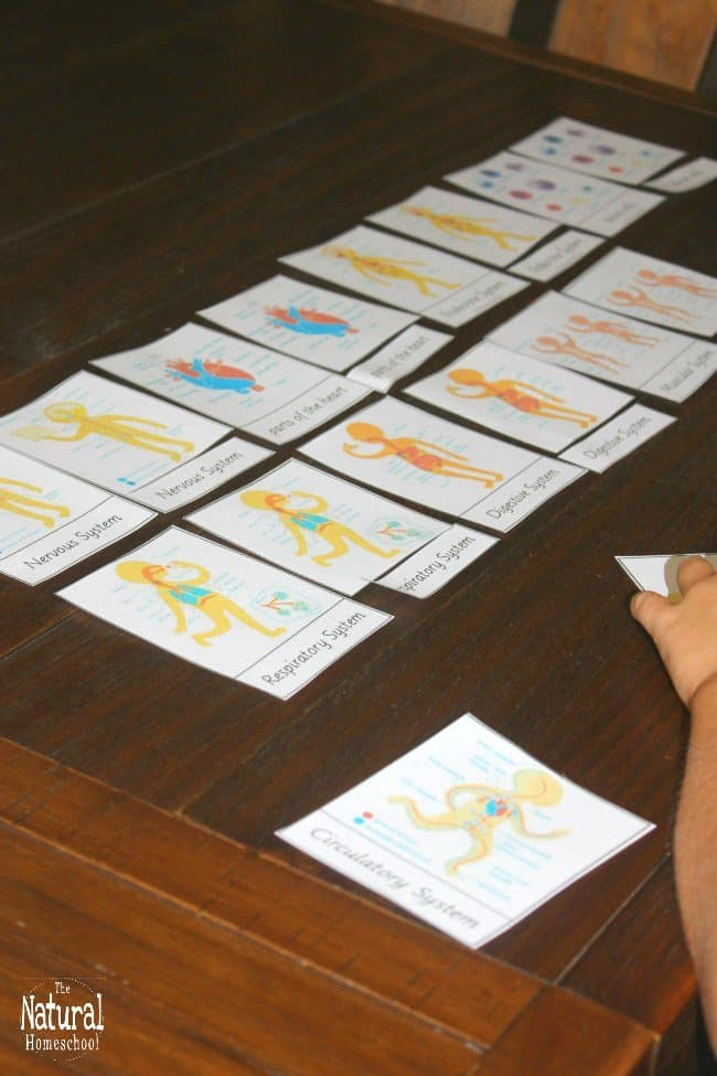 In this post, we will be talking about the Human Body Systems printable 3-part cards that we used as an enrichment activity after our lesson.