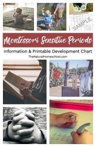 Printable Montessori Sensitive Periods Development Chart & Information