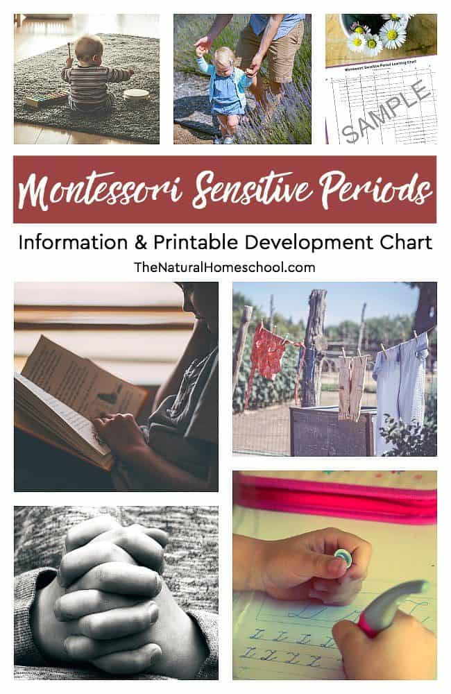 In this post, I will share with you an essential and very helpful printable Montessori Sensitive Periods development chart and information about it.