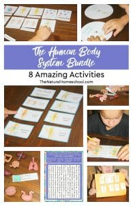 The Human Body System Bundle ~ 8 Amazing Activities